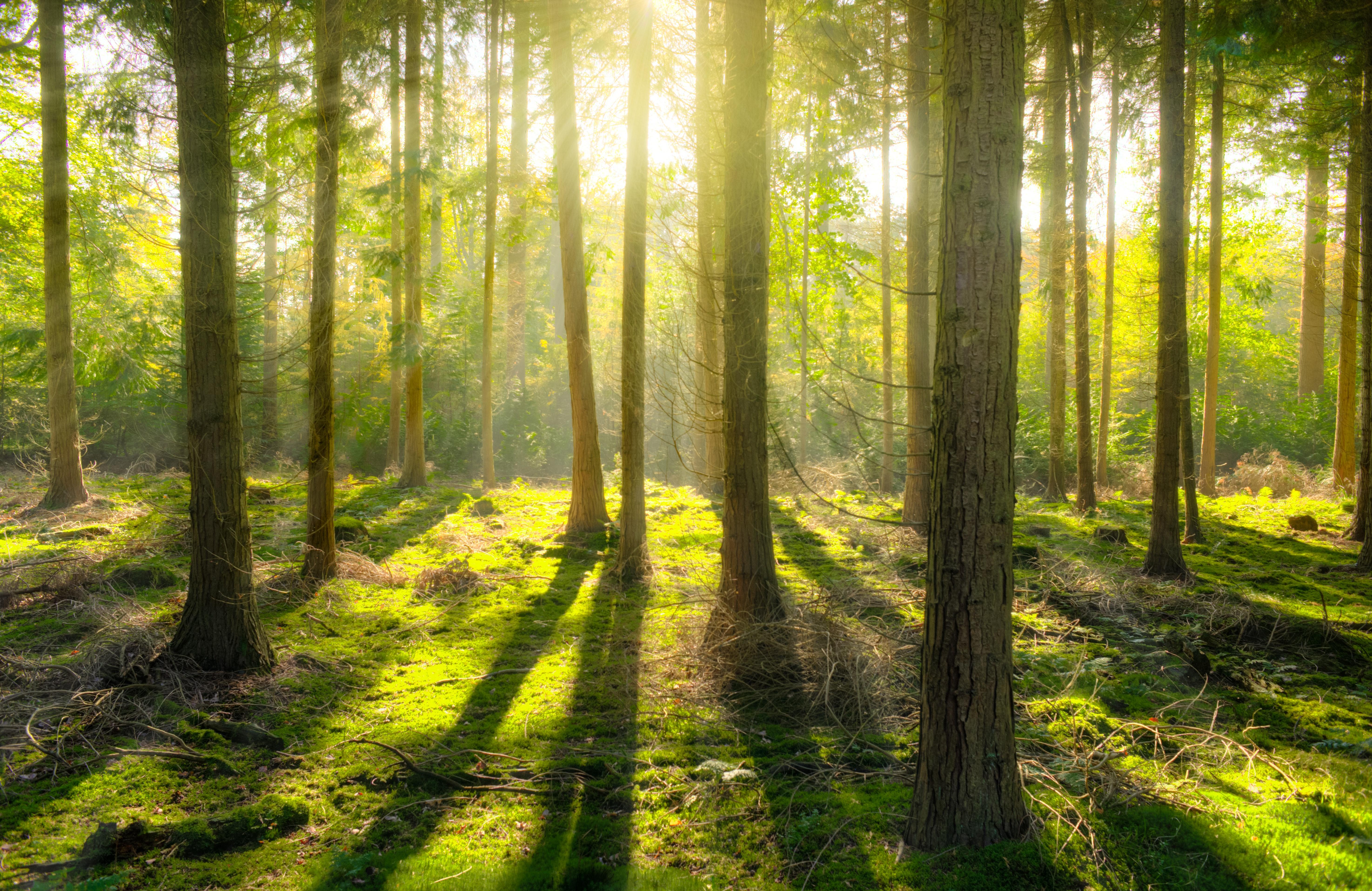 Die nachhaltige Schreinerei Holzhandwerkstatt Schmidt Winterhur